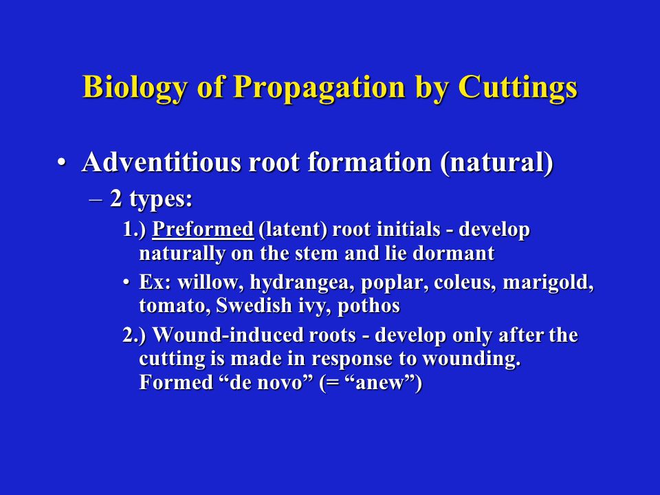 Biology of Propagation by Cuttings Adventitious root formation (natural)Adventitious root formation (natural) –2 types: 1.) Preformed (latent) root initials - develop naturally on the stem and lie dormant Ex: willow, hydrangea, poplar, coleus, marigold, tomato, Swedish ivy, pothosEx: willow, hydrangea, poplar, coleus, marigold, tomato, Swedish ivy, pothos 2.) Wound-induced roots - develop only after the cutting is made in response to wounding.