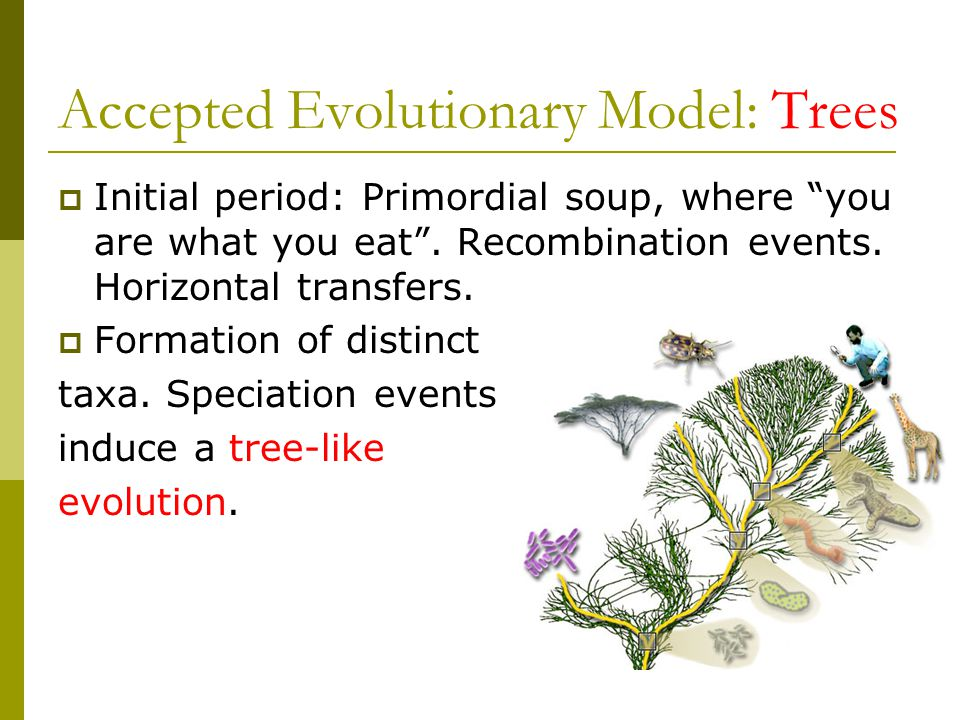 Accepted Evolutionary Model: Trees  Initial period: Primordial soup, where you are what you eat .