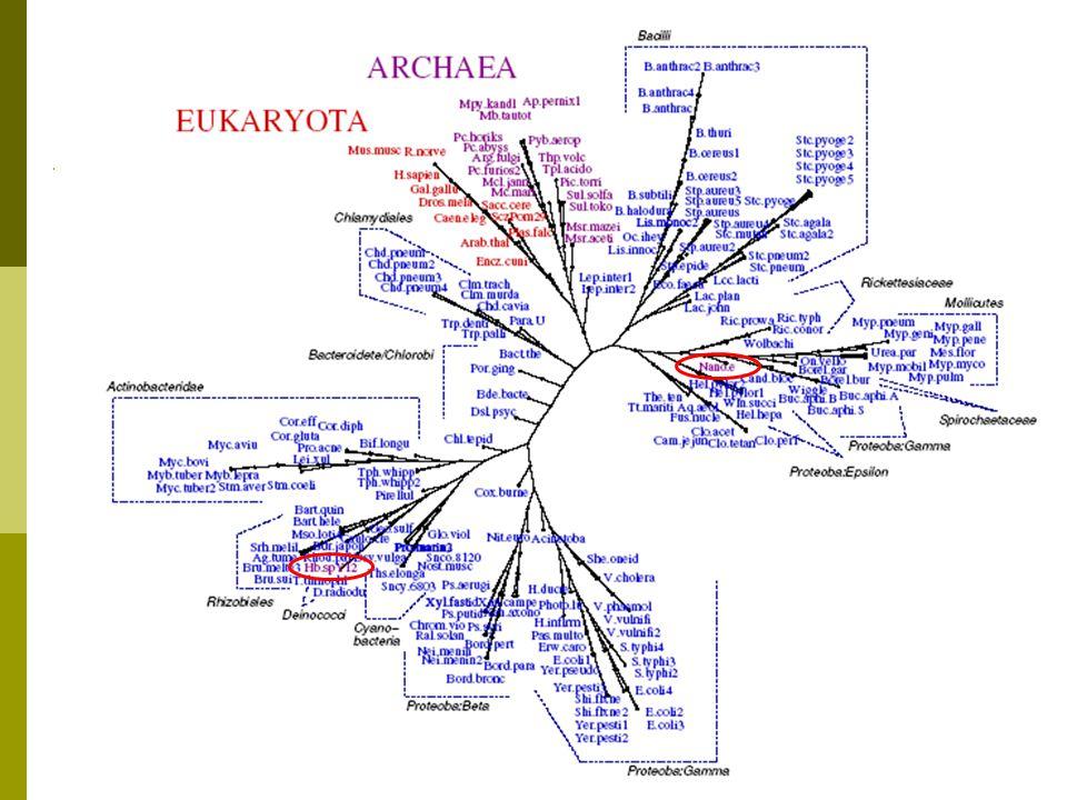  191 proteomes from NCBI Genome  11 Eukarya, 19 Archaea, 161 Bacteria  Compared to NCBI Taxonomy All Proteomes Dataset