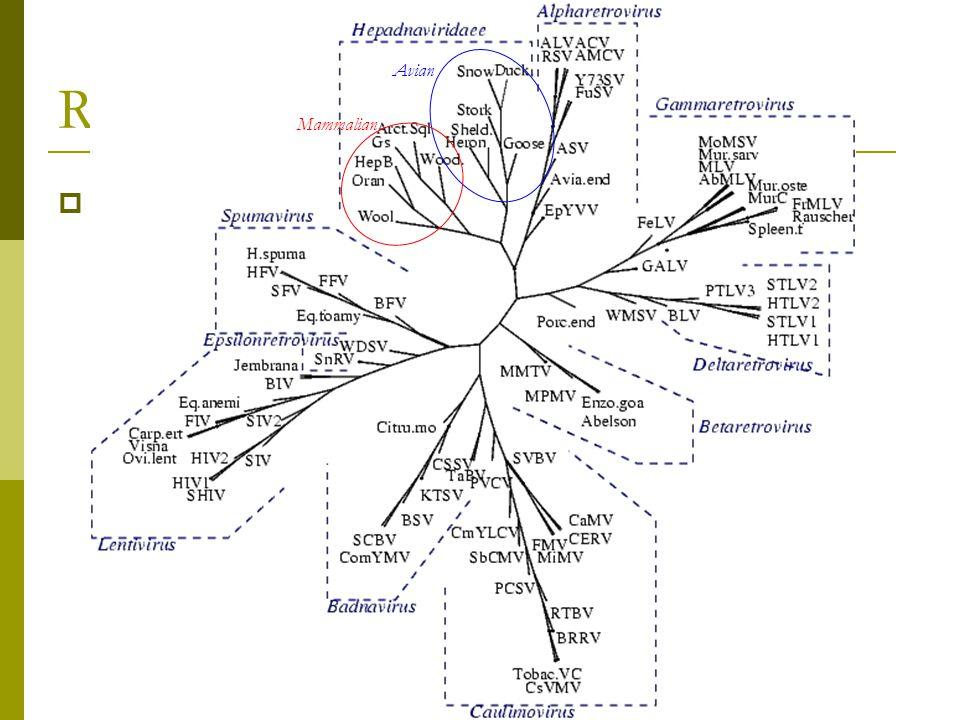  83 Reverse-transcriptases: Hepatitis B viruses Circular dsDNA ssRNA Retroid Tree Avian Mammalian