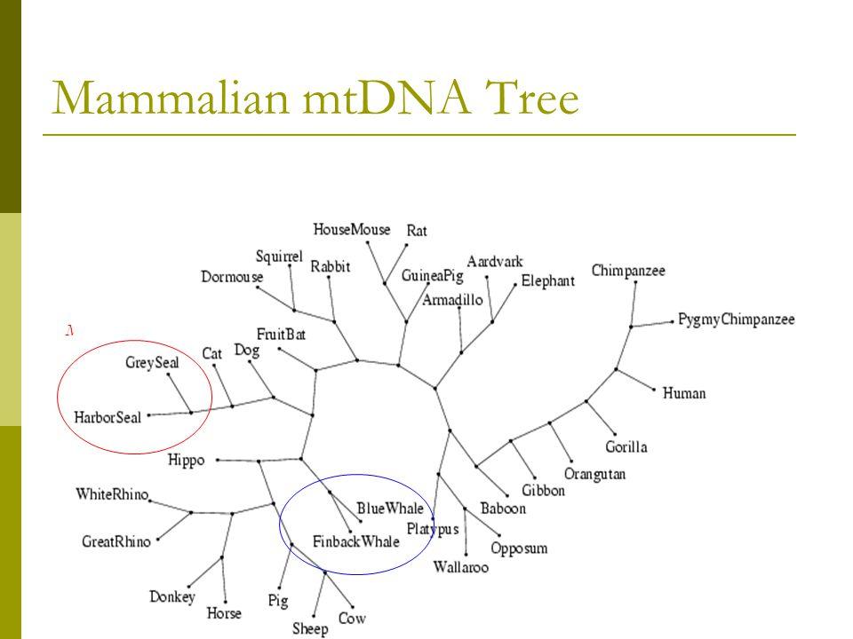 Mammalian mtDNA Tree Avian Mammalian