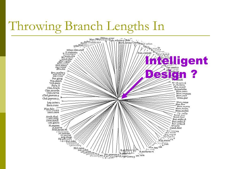 Intelligent Design Throwing Branch Lengths In
