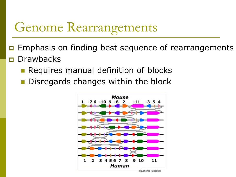 Genome Rearrangements  Emphasis on finding best sequence of rearrangements  Drawbacks Requires manual definition of blocks Disregards changes within the block