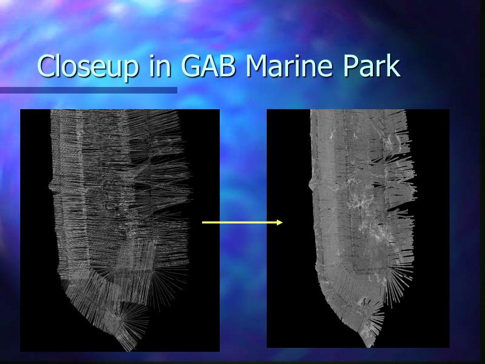 Closeup in GAB Marine Park