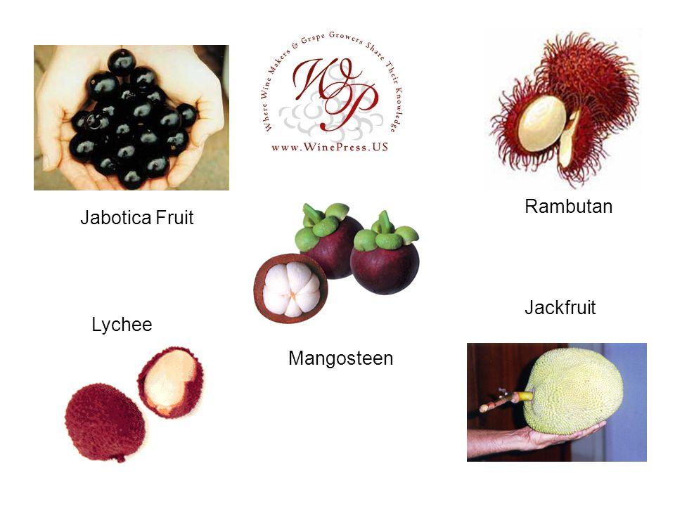 Jabotica Fruit Mangosteen Rambutan Jackfruit Lychee