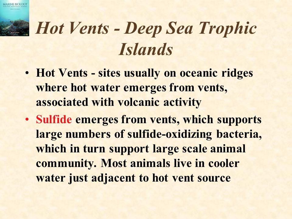 Hot Vents - Deep Sea Trophic Islands Hot Vents - sites usually on oceanic ridges where hot water emerges from vents, associated with volcanic activity Sulfide emerges from vents, which supports large numbers of sulfide-oxidizing bacteria, which in turn support large scale animal community.