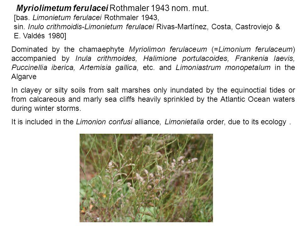 Myriolimetum ferulacei Rothmaler 1943 nom. mut. [bas. Limonietum ferulacei Rothmaler 1943, sin. Inulo crithmoidis-Limonietum ferulacei Rivas-Martínez,