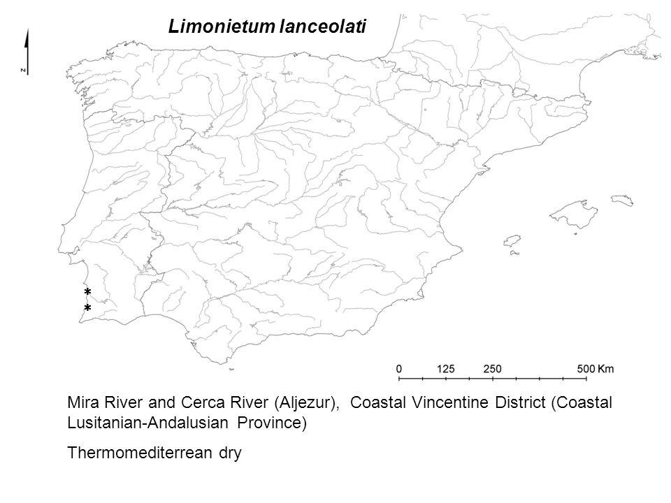 Limonietum lanceolati   Mira River and Cerca River (Aljezur), Coastal Vincentine District (Coastal Lusitanian-Andalusian Province) Thermomediterrean dry