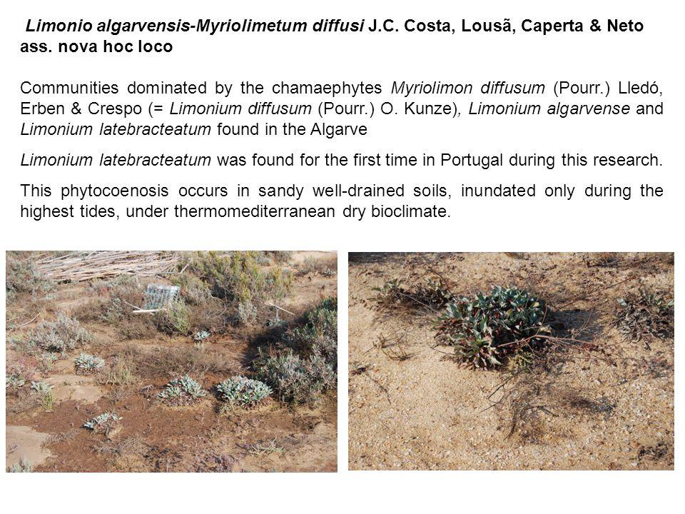 Limonio algarvensis-Myriolimetum diffusi J.C. Costa, Lousã, Caperta & Neto ass. nova hoc loco Communities dominated by the chamaephytes Myriolimon dif