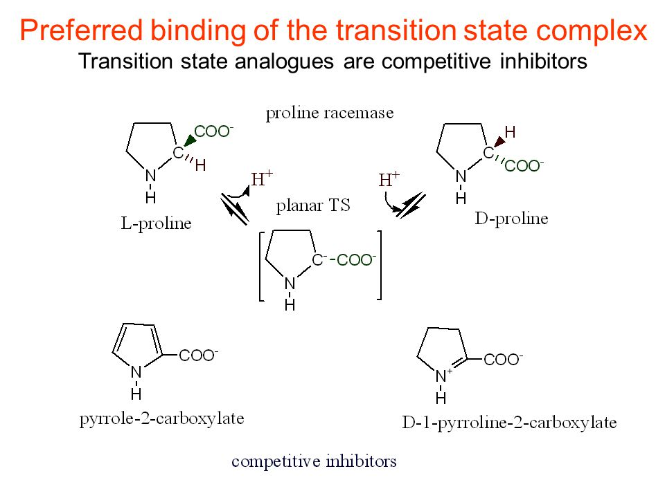 Preferred binding of the transition state complex Transition state analogues are competitive inhibitors