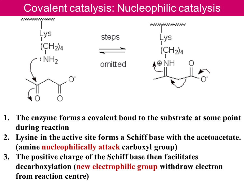 Covalent catalysis: Nucleophilic catalysis 1.The enzyme forms a covalent bond to the substrate at some point during reaction 2.Lysine in the active site forms a Schiff base with the acetoacetate.