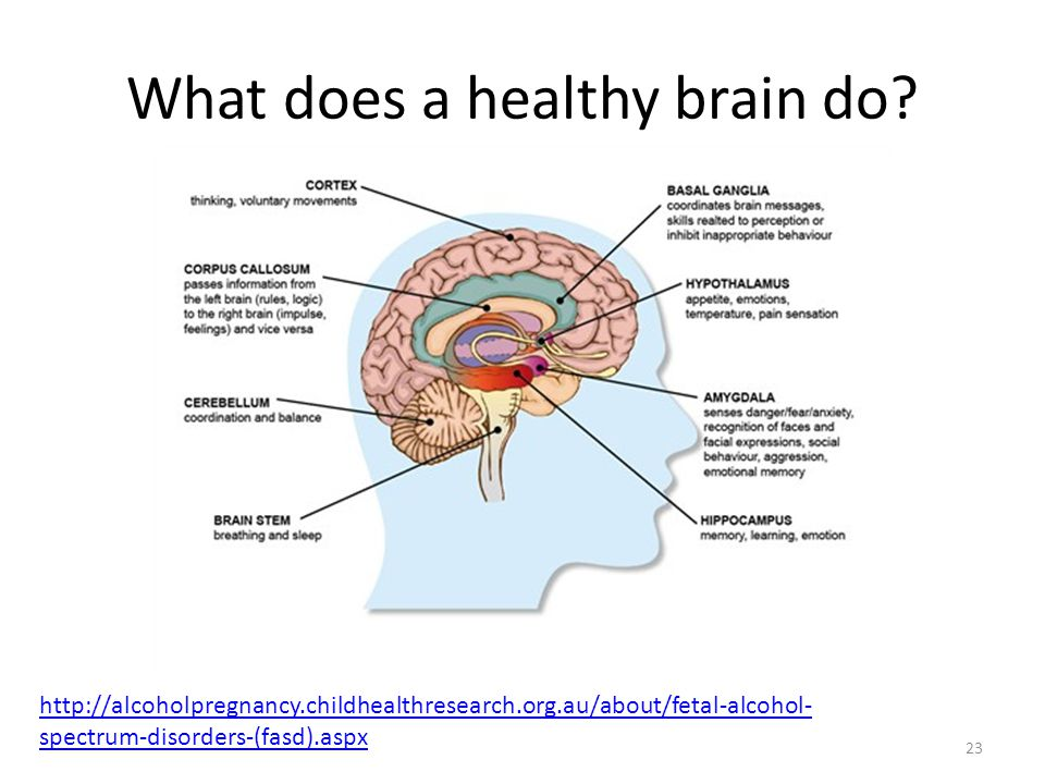 What does a healthy brain do? 23 http://alcoholpregnancy.childhealthresearch.org.au/about/fetal-alcohol- spectrum-disorders-(fasd).aspx