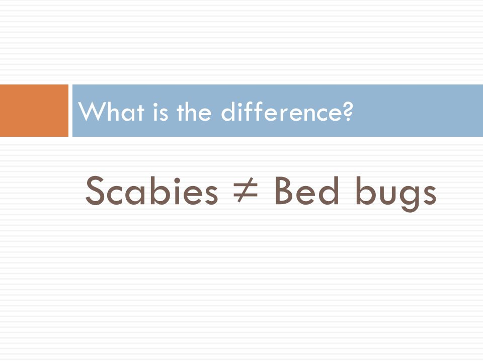 Scabies ≠ Bed bugs What is the difference?