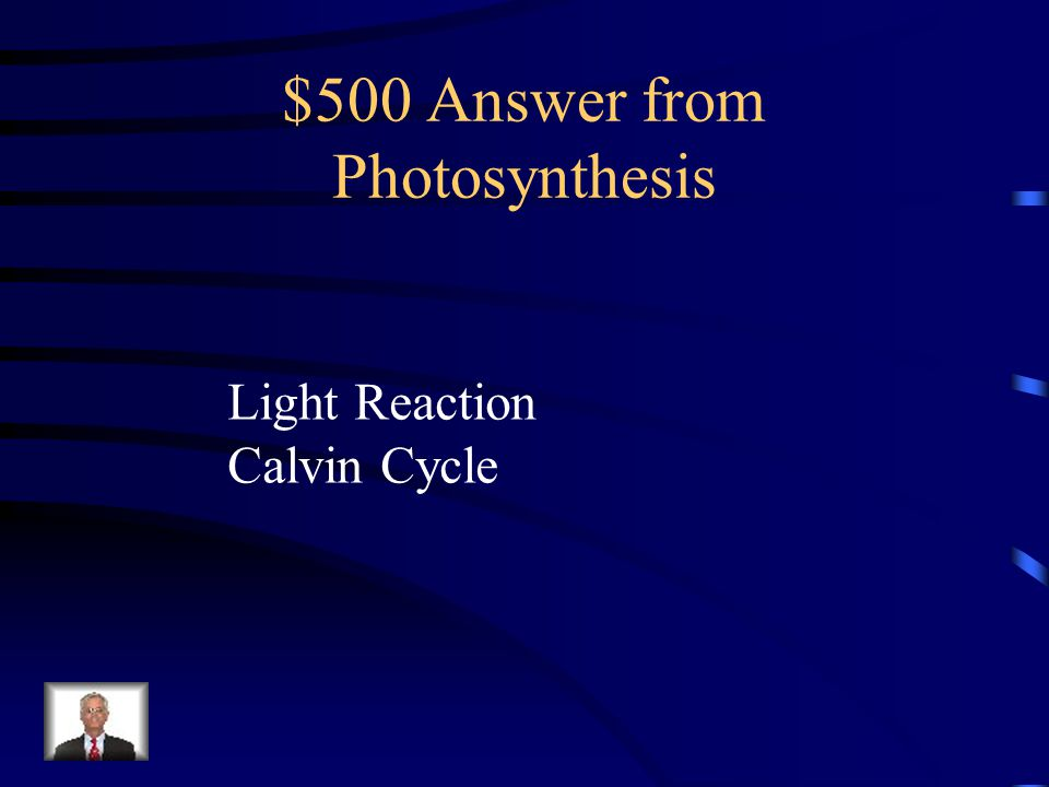 $500 Question from Photosynthesis What are the phases of photosythesis?