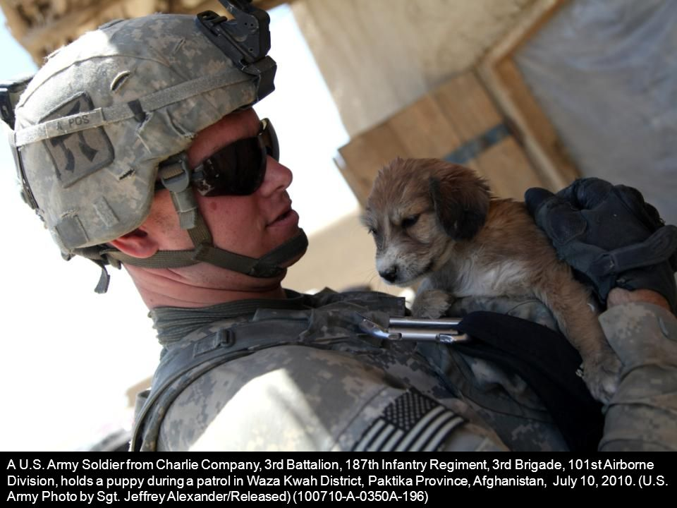 A U.S. Army Soldier from Charlie Company, 3rd Battalion, 187th Infantry Regiment, 3rd Brigade, 101st Airborne Division, holds a puppy during a patrol