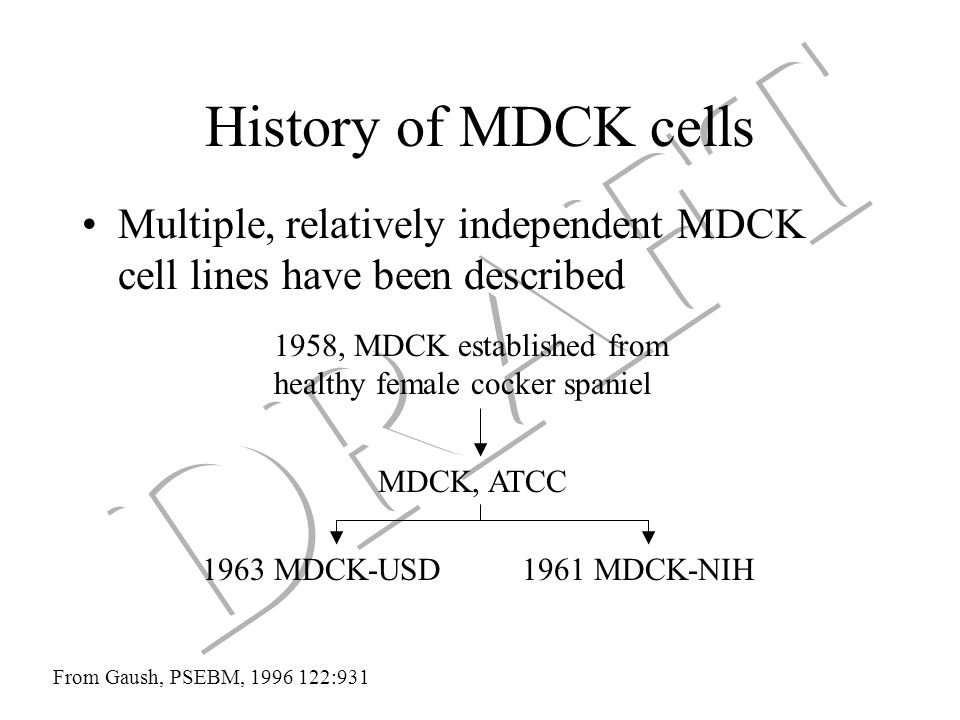 History of MDCK cells Multiple, relatively independent MDCK cell lines have been described From Gaush, PSEBM, 1996 122:931 1958, MDCK established from healthy female cocker spaniel MDCK, ATCC 1963 MDCK-USD1961 MDCK-NIH