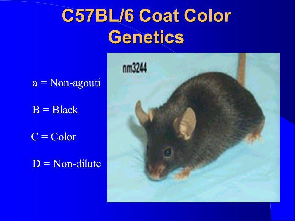 C57BL/6 Coat Color Genetics D = Non-dilute a = Non-agouti B = Black C = Color