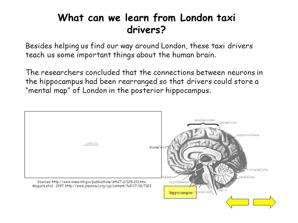 What can we learn from London taxi drivers.