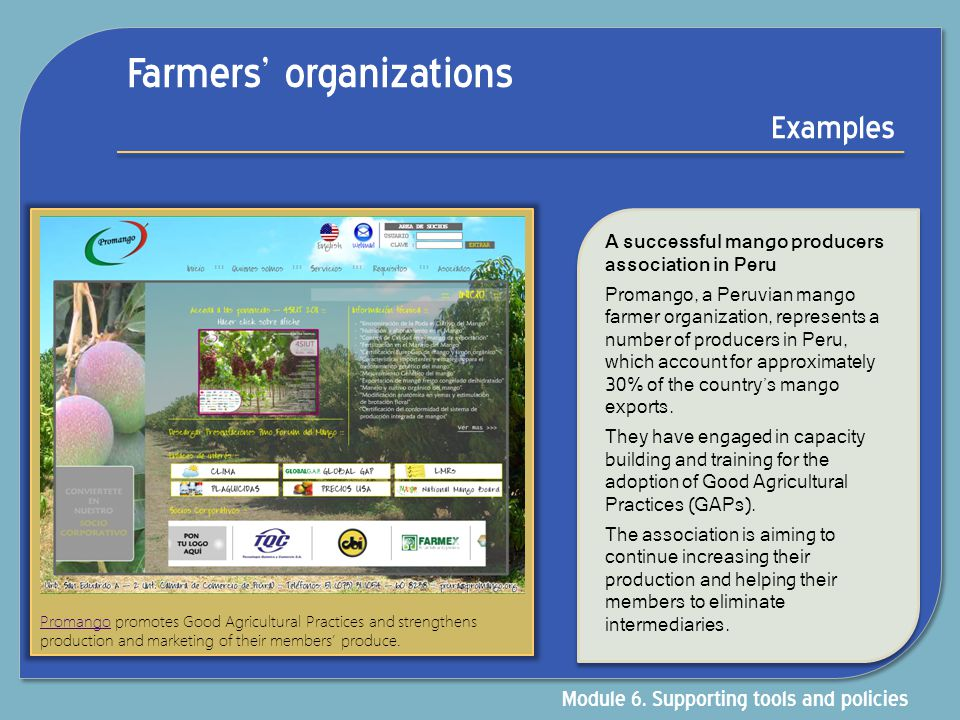 Farmers' organizations Examples A successful mango producers association in Peru Promango, a Peruvian mango farmer organization, represents a number o