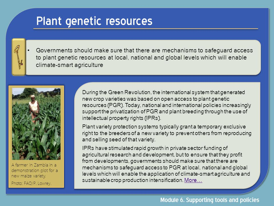 Plant genetic resources Governments should make sure that there are mechanisms to safeguard access to plant genetic resources at local, national and g