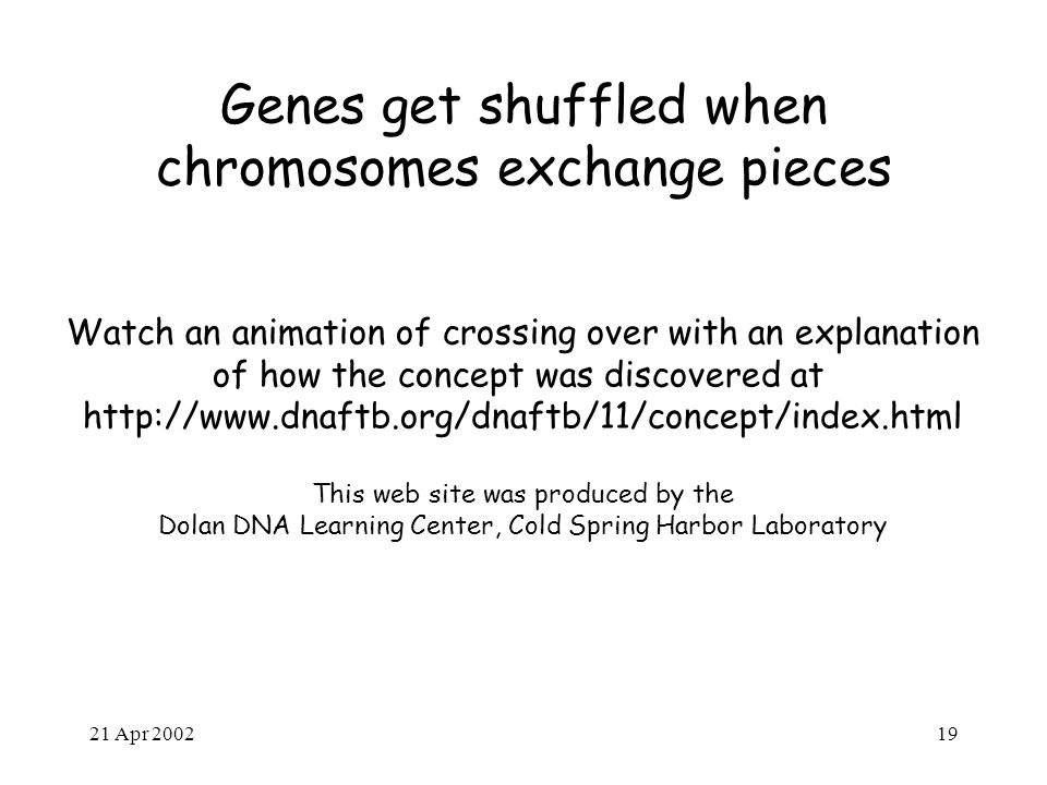 21 Apr 200219 Genes get shuffled when chromosomes exchange pieces Watch an animation of crossing over with an explanation of how the concept was discovered at http://www.dnaftb.org/dnaftb/11/concept/index.html This web site was produced by the Dolan DNA Learning Center, Cold Spring Harbor Laboratory
