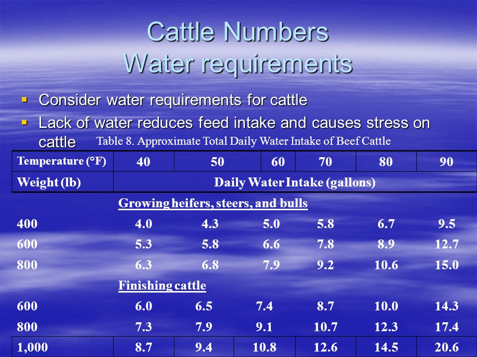 Cattle Numbers Water requirements  Consider water requirements for cattle  Lack of water reduces feed intake and causes stress on cattle Table 8.