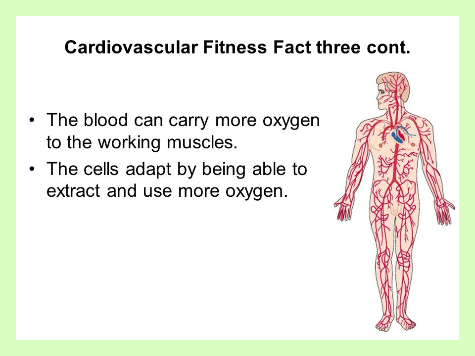 Cardiovascular Fitness Fact three cont. The blood can carry more oxygen to the working muscles. The cells adapt by being able to extract and use more
