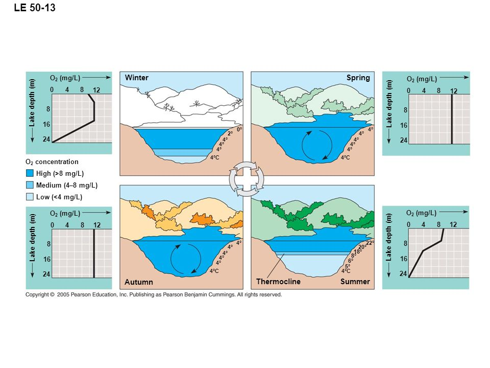 LE 50-13 Winter O 2 (mg/L) 12 Lake depth (m) 24 16 8 840 O 2 concentration High (>8 mg/L) Medium (4–8 mg/L) Low (<4 mg/L) O 2 (mg/L) 12 Lake depth (m)
