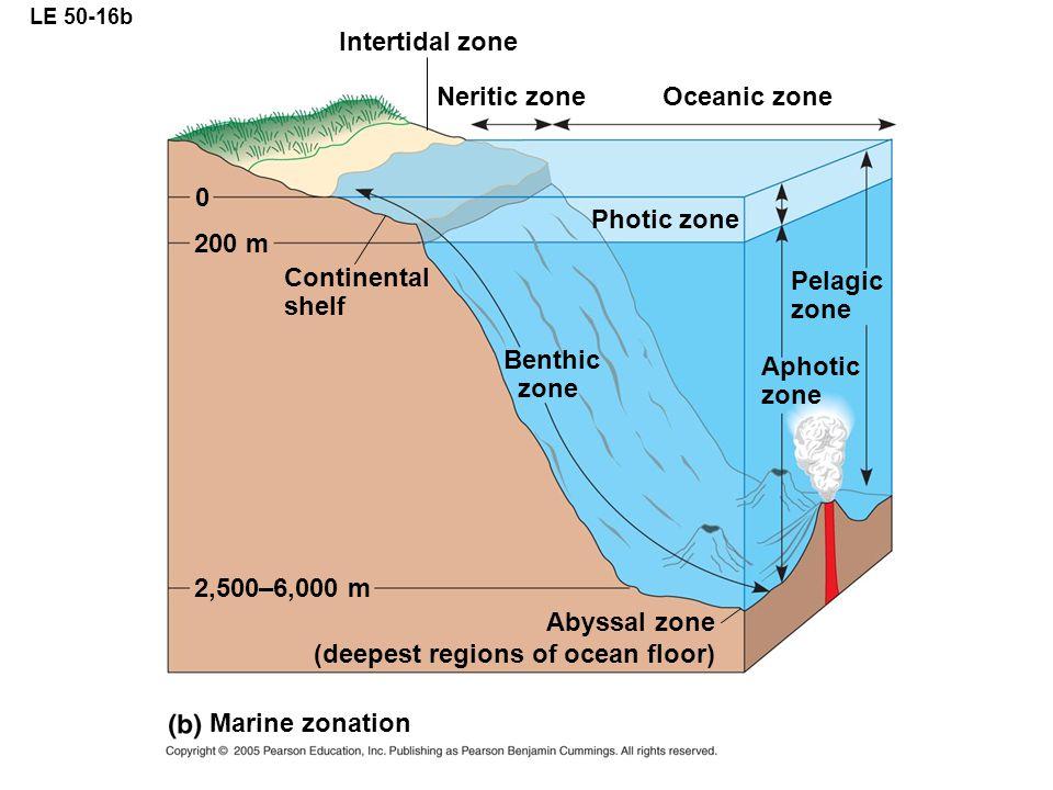 LE 50-16b Marine zonation Benthic zone Pelagic zone Aphotic zone Photic zone Oceanic zone Neritic zone Intertidal zone Continental shelf 0 200 m 2,500