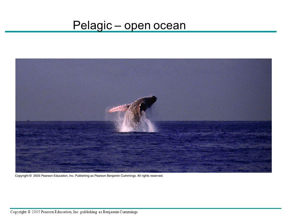 Copyright © 2005 Pearson Education, Inc. publishing as Benjamin Cummings Pelagic – open ocean