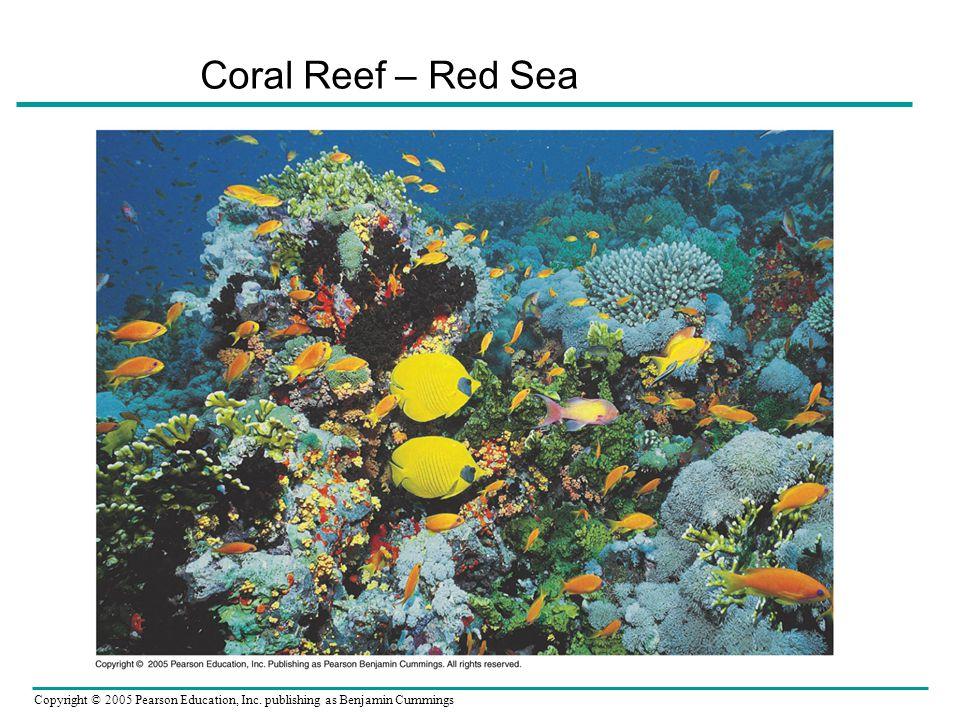 Copyright © 2005 Pearson Education, Inc. publishing as Benjamin Cummings Coral Reef – Red Sea