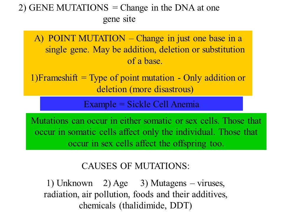 2) GENE MUTATIONS = Change in the DNA at one gene site A)POINT MUTATION – Change in just one base in a single gene. May be addition, deletion or subst