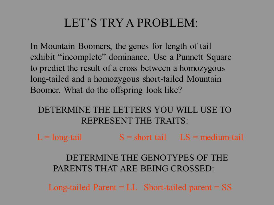 """LET'S TRY A PROBLEM: In Mountain Boomers, the genes for length of tail exhibit """"incomplete"""" dominance. Use a Punnett Square to predict the result of a"""