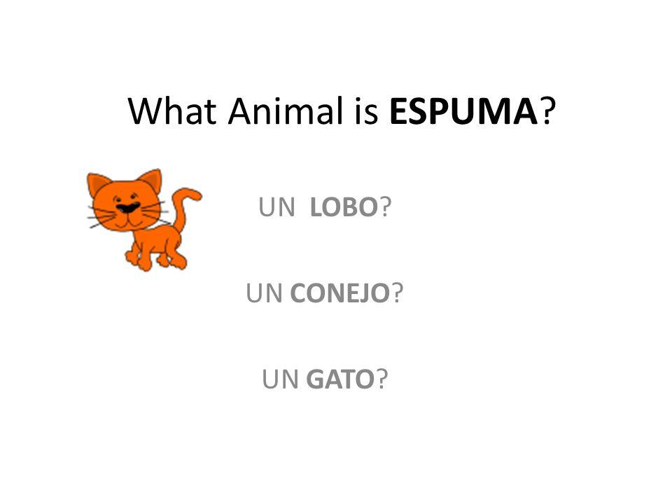 What Animal is ESPUMA UN LOBO UN CONEJO UN GATO