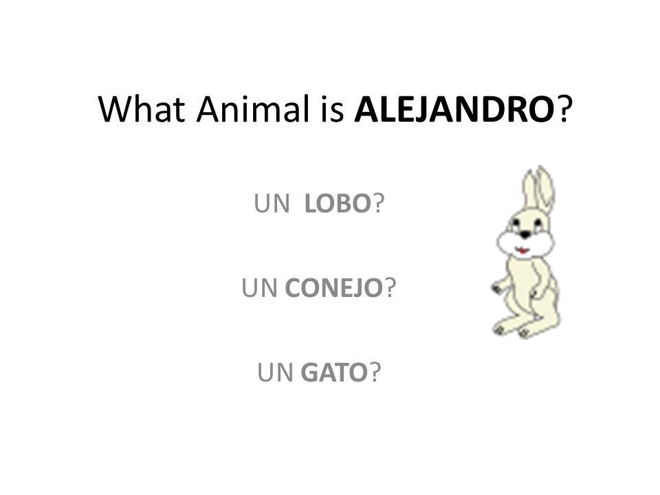 What Animal is ALEJANDRO UN LOBO UN CONEJO UN GATO