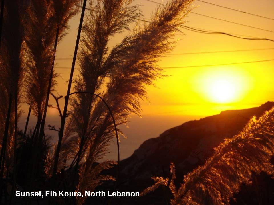 Sunset, Fih Koura, North Lebanon