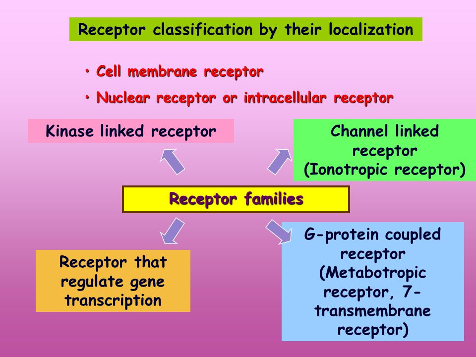 Drugs act at receptor Receptor Receptor of chemical messenger in the body Receptor of specific drug Receptors are mostly named after their ligand.