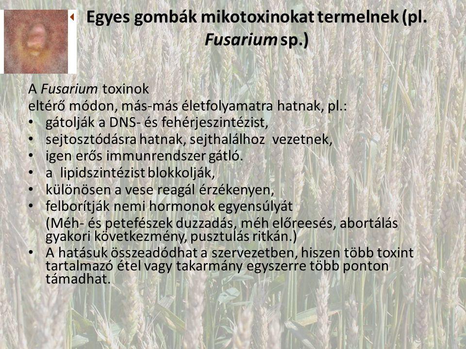 Egyes gombák mikotoxinokat termelnek (pl.