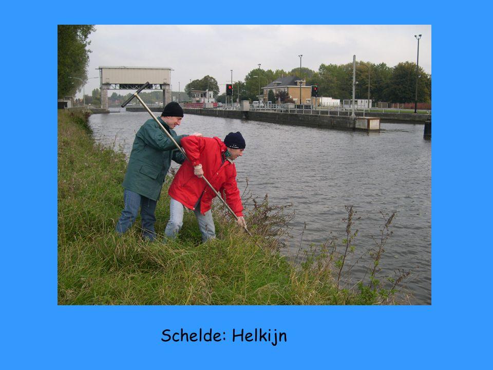 Schelde: Antoing