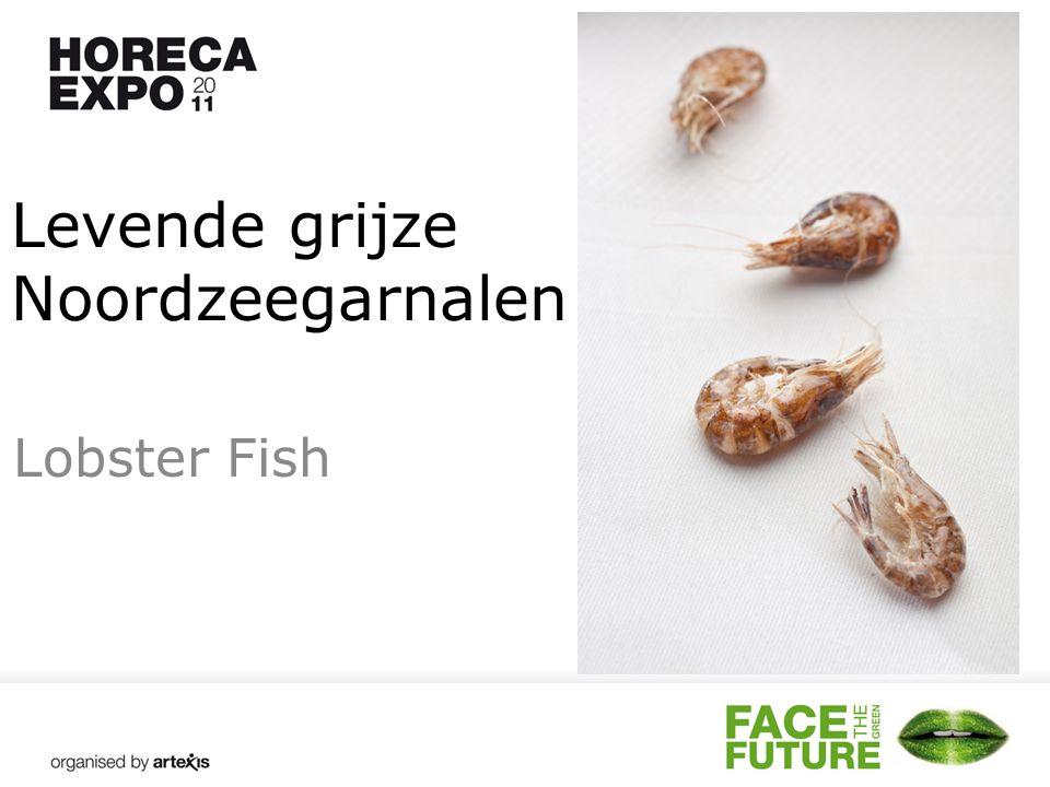 Levende grijze Noordzeegarnalen Lobster Fish