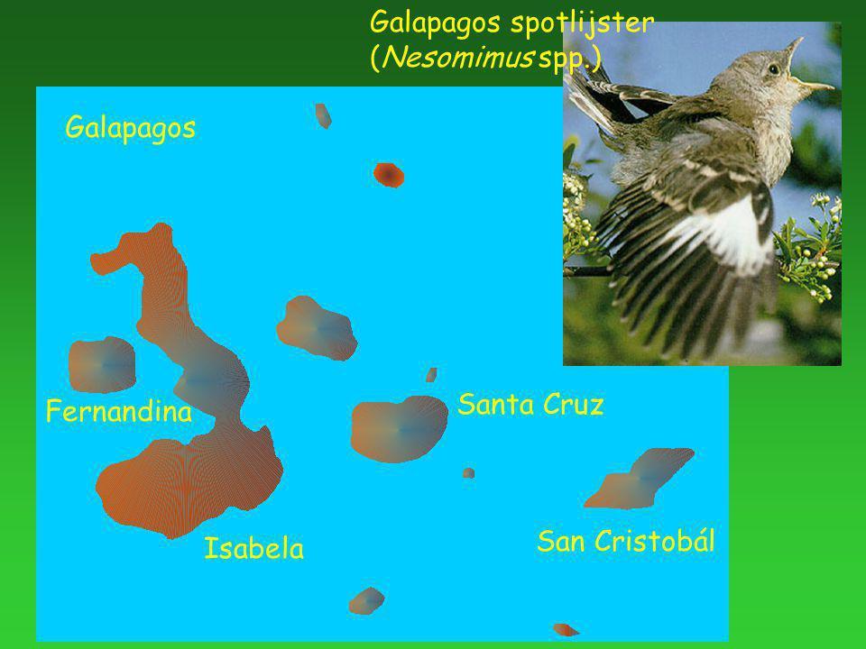 Galapagos spotlijster (Nesomimus spp.) Galapagos San Cristobál Santa Cruz Isabela Fernandina