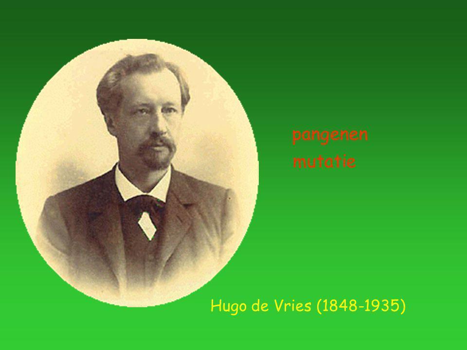 Hugo de Vries (1848-1935) pangenen mutatie