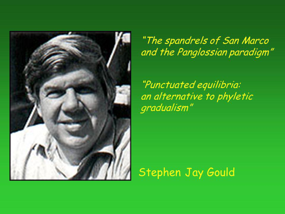 Stephen Jay Gould The spandrels of San Marco and the Panglossian paradigm Punctuated equilibria: an alternative to phyletic gradualism