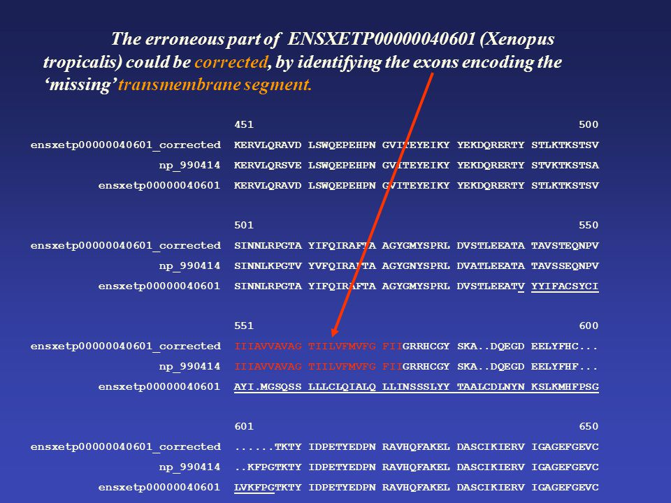 The erroneous part of ENSXETP00000040601 (Xenopus tropicalis) could be corrected, by identifying the exons encoding the 'missing' transmembrane segment.