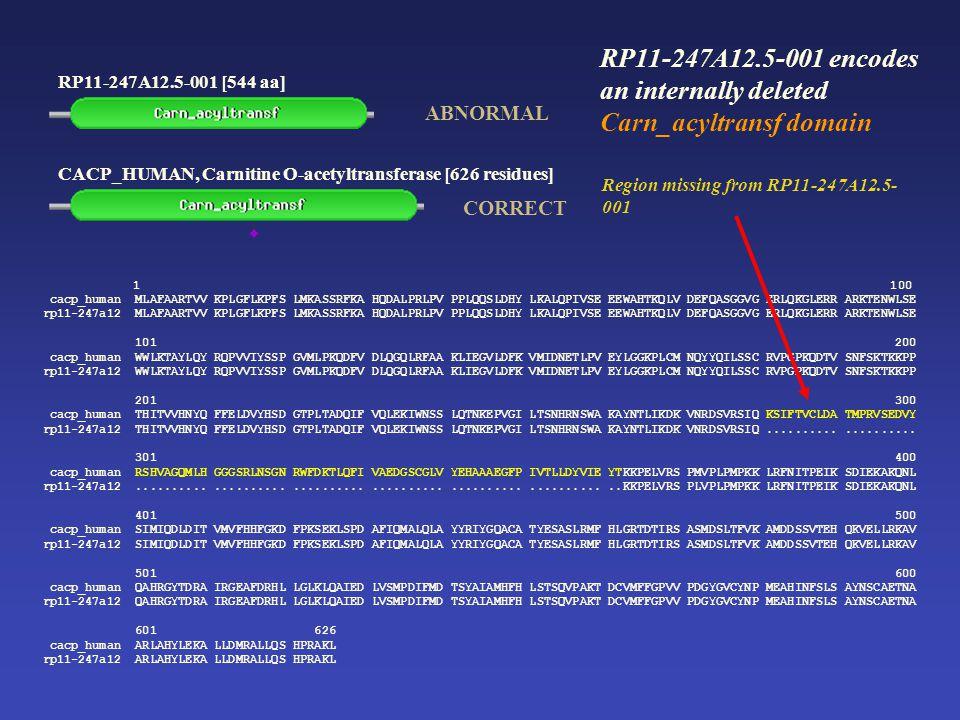 RP11-247A12.5-001 [544 aa] CACP_HUMAN, Carnitine O-acetyltransferase [626 residues] 1 100 cacp_human MLAFAARTVV KPLGFLKPFS LMKASSRFKA HQDALPRLPV PPLQQSLDHY LKALQPIVSE EEWAHTKQLV DEFQASGGVG ERLQKGLERR ARKTENWLSE rp11-247a12 MLAFAARTVV KPLGFLKPFS LMKASSRFKA HQDALPRLPV PPLQQSLDHY LKALQPIVSE EEWAHTKQLV DEFQASGGVG ERLQKGLERR ARKTENWLSE 101 200 cacp_human WWLKTAYLQY RQPVVIYSSP GVMLPKQDFV DLQGQLRFAA KLIEGVLDFK VMIDNETLPV EYLGGKPLCM NQYYQILSSC RVPGPKQDTV SNFSKTKKPP rp11-247a12 WWLKTAYLQY RQPVVIYSSP GVMLPKQDFV DLQGQLRFAA KLIEGVLDFK VMIDNETLPV EYLGGKPLCM NQYYQILSSC RVPGPKQDTV SNFSKTKKPP 201 300 cacp_human THITVVHNYQ FFELDVYHSD GTPLTADQIF VQLEKIWNSS LQTNKEPVGI LTSNHRNSWA KAYNTLIKDK VNRDSVRSIQ KSIFTVCLDA TMPRVSEDVY rp11-247a12 THITVVHNYQ FFELDVYHSD GTPLTADQIF VQLEKIWNSS LQTNKEPVGI LTSNHRNSWA KAYNTLIKDK VNRDSVRSIQ....................