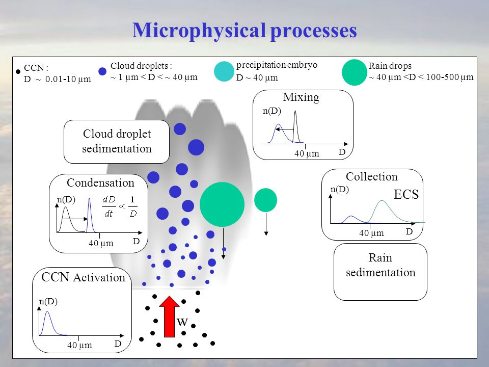 Microphysical processes Condensation w Rain drops ~ 40 µm <D < 100-500 µm Cloud droplet sedimentation CCN : D ~ 0.01-10 µm D 40 µm D n(D) Mixing D 40 µm n(D) Collection D 40 µm n(D) ECS Cloud droplets : ~ 1 µm < D < ~ 40 µm precipitation embryo D ~ 40 µm CCN Activation Rain sedimentation