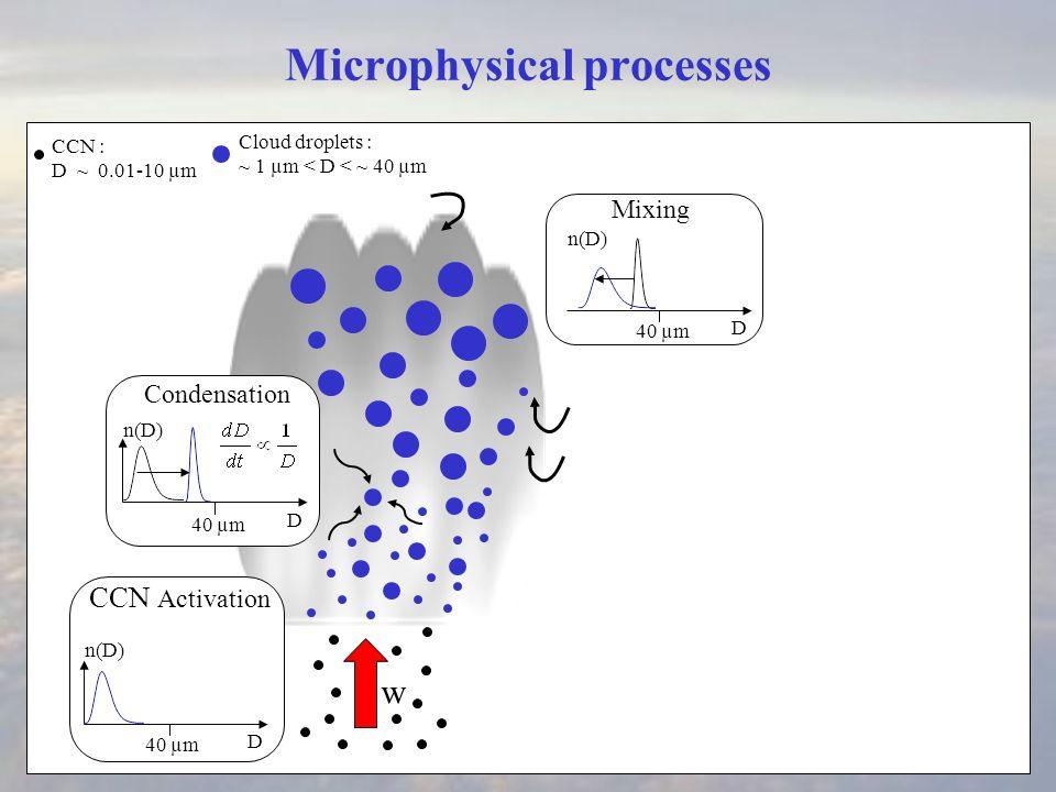 Microphysical processes Condensation w CCN : D ~ 0.01-10 µm D 40 µm D n(D) Cloud droplets : ~ 1 µm < D < ~ 40 µm CCN Activation Cloud droplet sedimentation Mixing D 40 µm n(D)