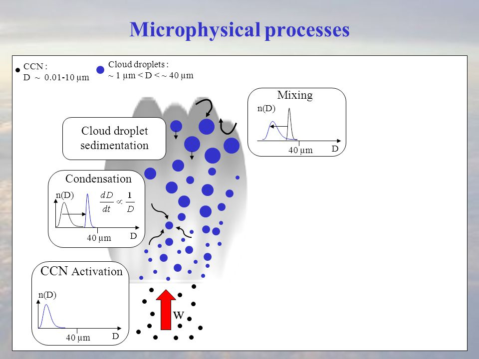 Microphysical processes Condensation w CCN : D ~ 0.01-10 µm D 40 µm D n(D) Cloud droplets : ~ 1 µm < D < ~ 40 µm CCN Activation Cloud droplet sedimentation Mixing D 40 µm n(D)