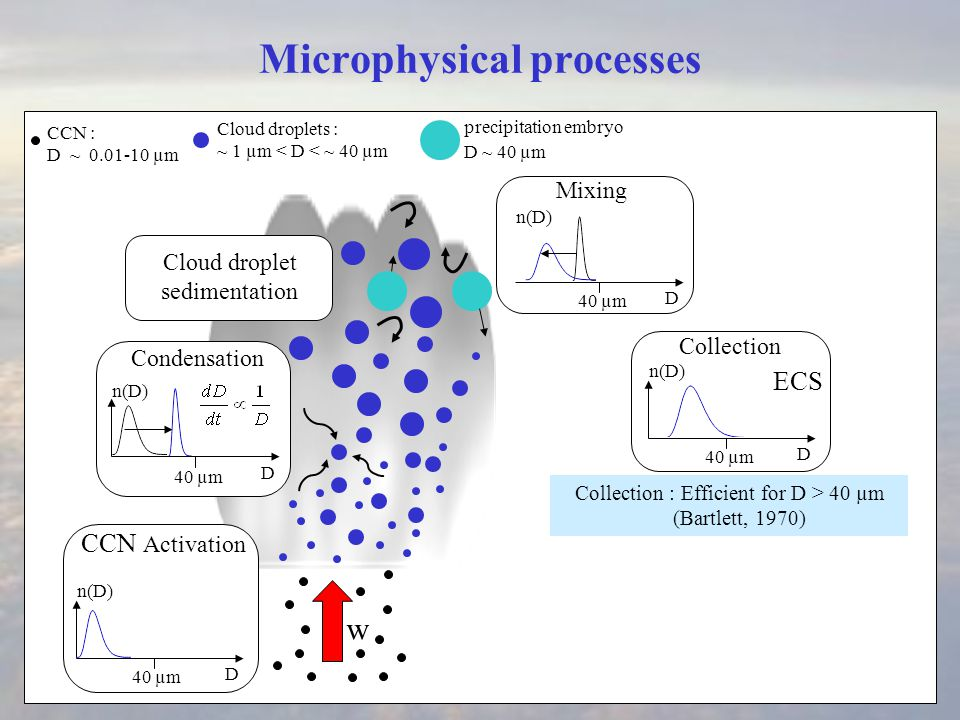 Microphysical processes Cloud droplets : ~ 1 µm < D < ~ 40 µm Condensation w precipitation embryo D ~ 40 µm Cloud droplet sedimentation CCN : D ~ 0.01-10 µm D 40 µm D n(D) Collection D 40 µm n(D) ECS CCN Activation Collection : Efficient for D > 40 µm (Bartlett, 1970) Mixing D 40 µm n(D)