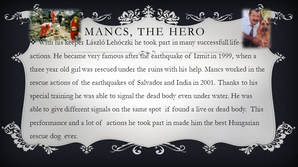 MANCS, THE HERO WWith his keeper László Lehóczki he took part in many successfull life-saving actions.